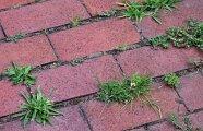 Лайфхак: Как без труда избавиться от сорняков, прорастающих сквозь плитку на дорожке