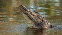 Общество: 5 вещей, которые крокодилы делать не умеют и вряд ли научатся